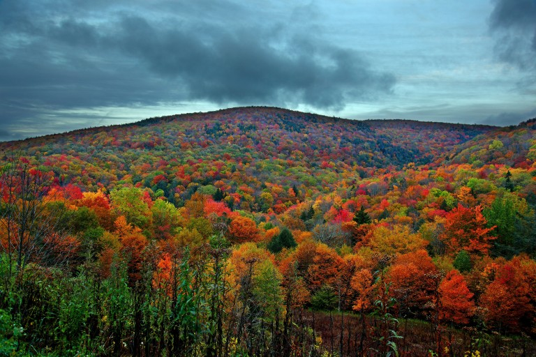 Colorful-autumn-mountain_-_Virginia_-_ForestWander.jpg
