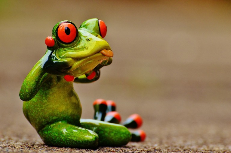 frog-1212224_960_720