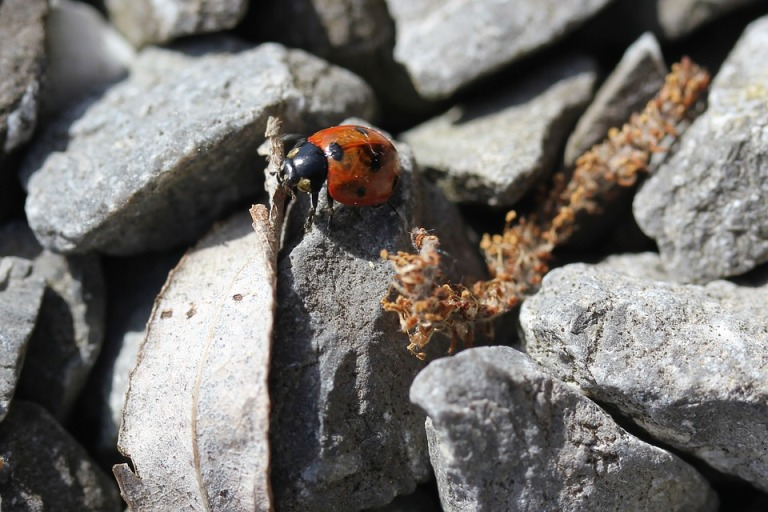 Courage Grey Ladybug Adventure Pebble Red Only