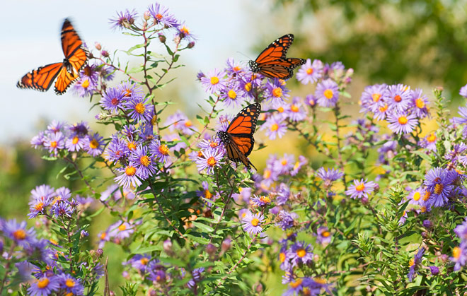 gardens-that-attract-butterflies
