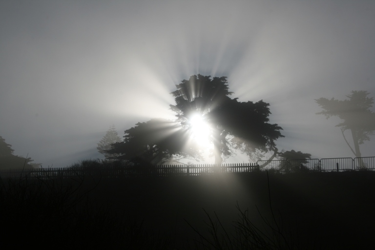 Fog_shadow_of_a_tree-crepuscular_rays