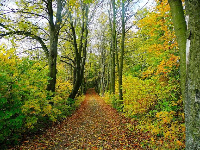 path-in-the-woods-1329993069LfF.jpg