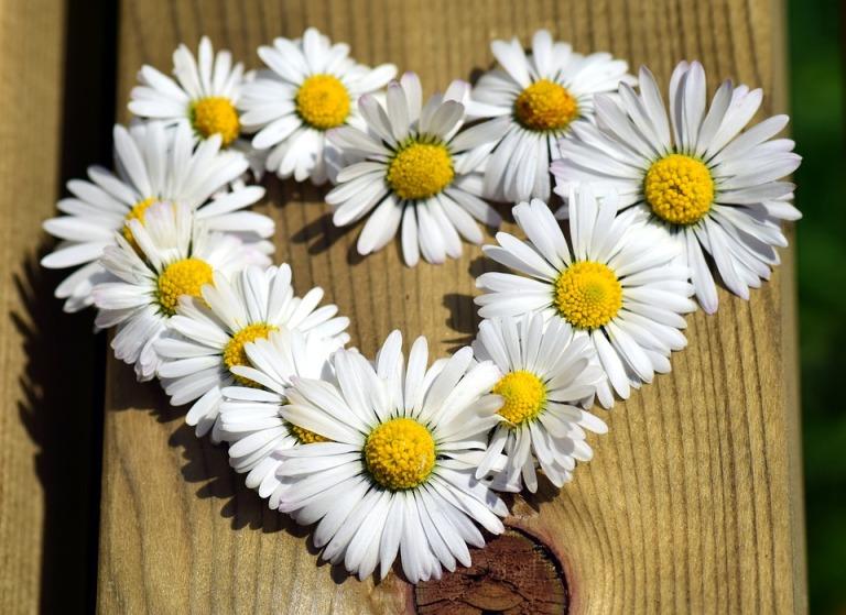 heart-2296841_960_720