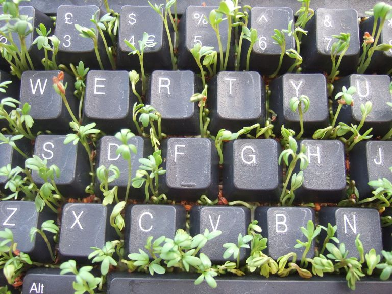 1280px-Cress_keyboard-3_sprouting_top