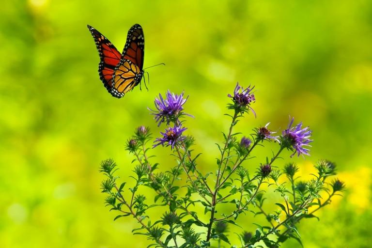 butterfly-1990204_960_720