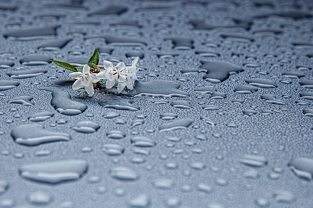Drop Water Rain Drops Rain Abstract Moisture