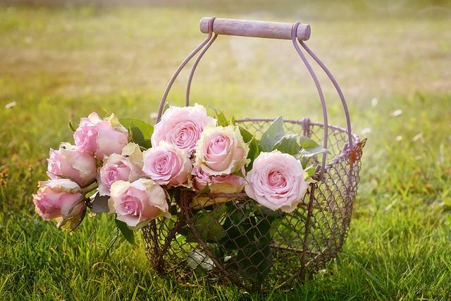 Rose Bloom Roses Bloom Pink Rose Blossom