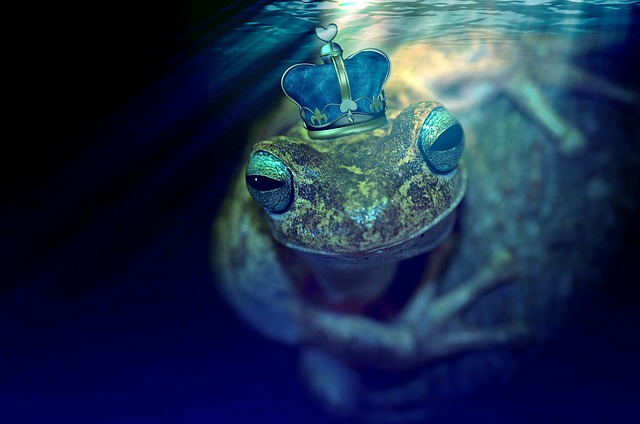 Frog Frog Prince Fairy Tales Prince Crown Pond