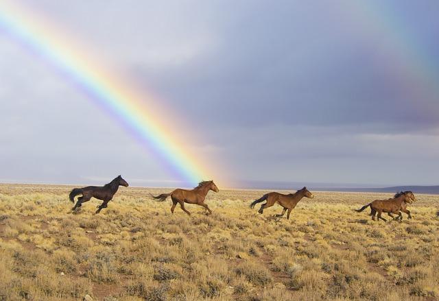 wild-horses-2239420_640