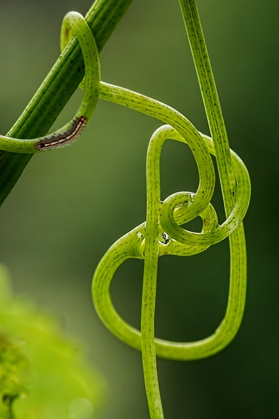 nature-grass-branch-growth-plant-vine-764637-pxhere.com