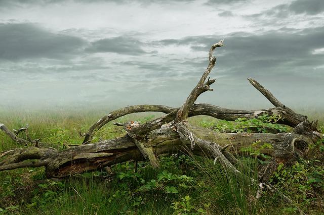 dead-tree-2267030_640.jpg