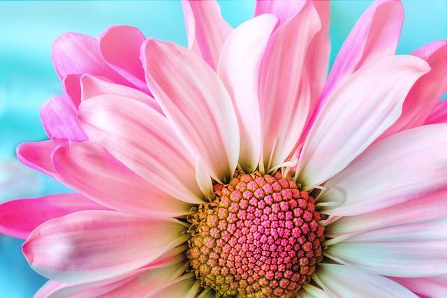 flower-3140492_640