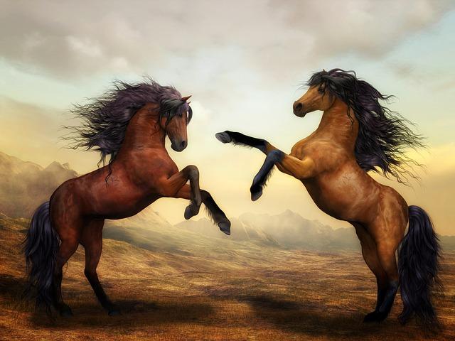 horses-2904536_640
