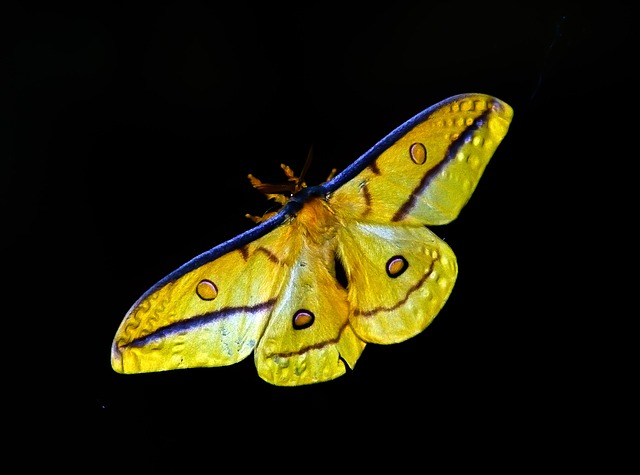 moth-425162_640