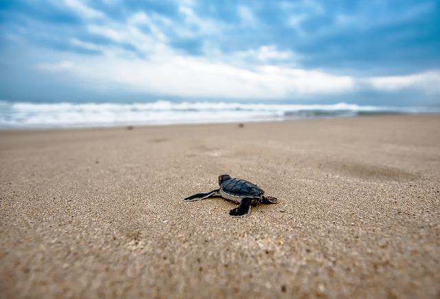 turtle-2201433_640