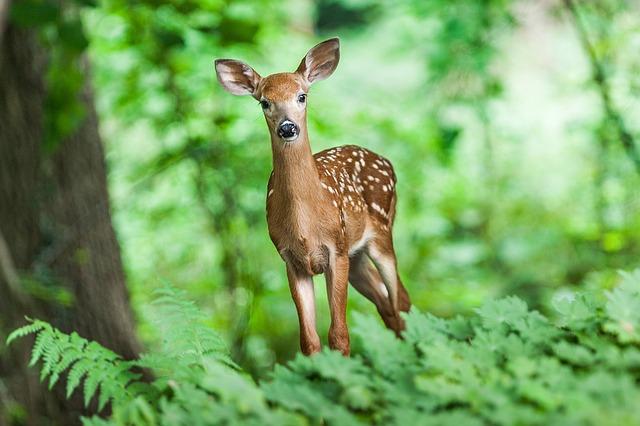 wildlife-1367217_640.jpg