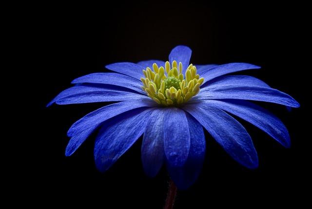 anemone-56414_640