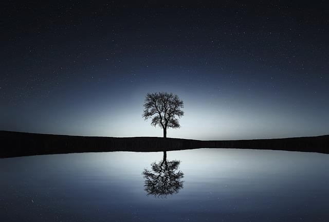 tree-736881_640