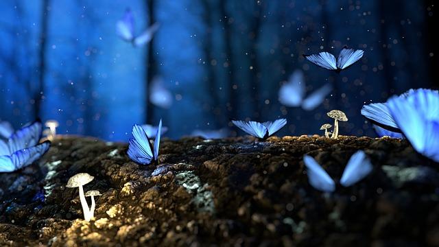 butterfly-2049567_640