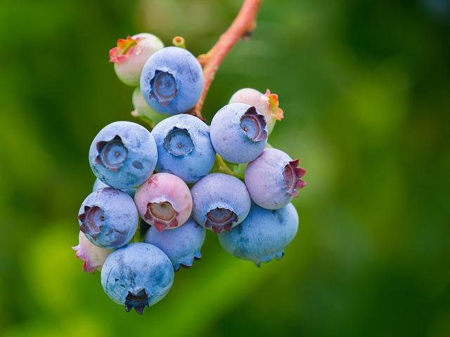 berries-3513547_640