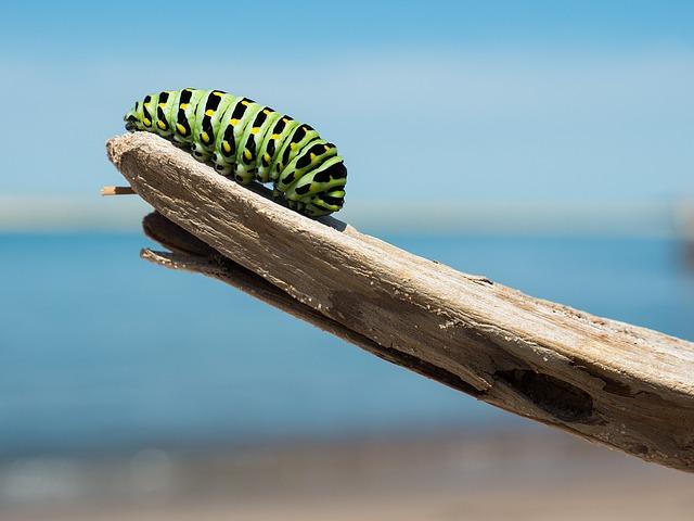 caterpillar-1209834_640