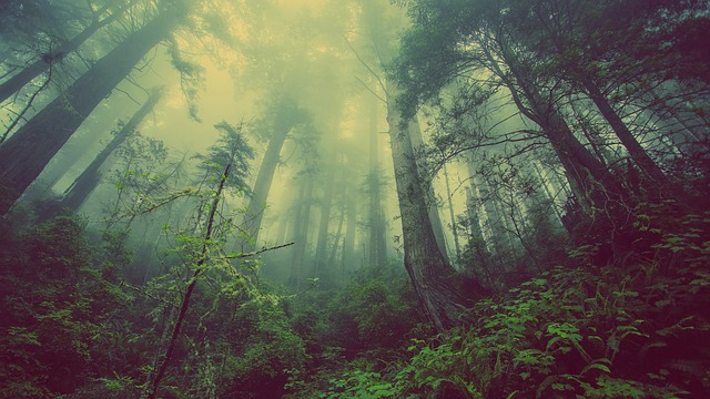 forest-931706_640