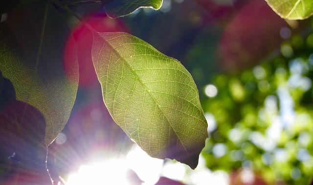 leaf-1209899_640