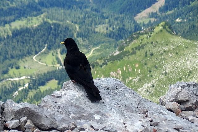 bird-3694048_640