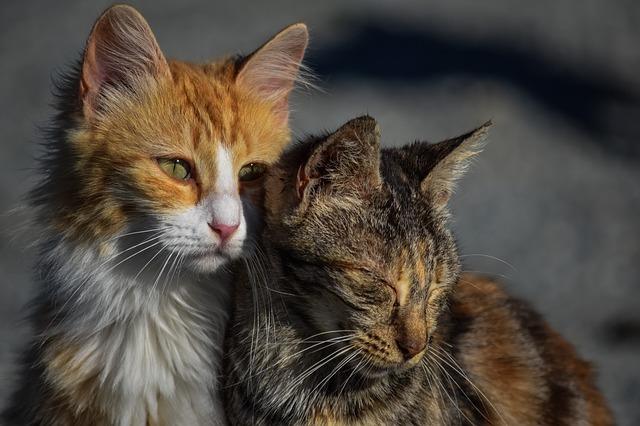 cat-3041498_640