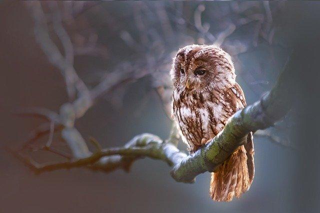 owl-1834152_640