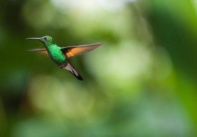 hummingbird-2139278_640