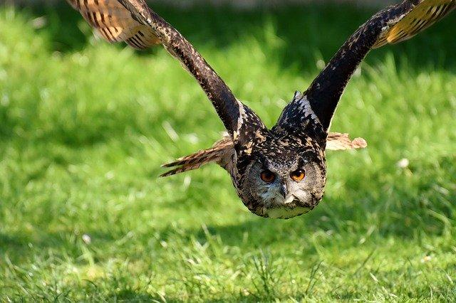 owl-3340957_640