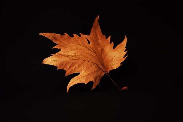 autumn-2887556_640