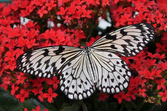 butterfly-1218884_640